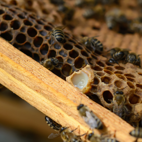 How Is Royal Jelly Good For You?