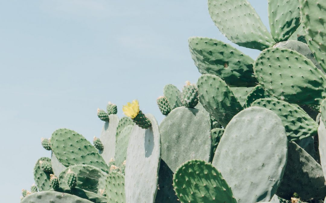 Nopal Cactus – What Is That? (And It's Benefits)